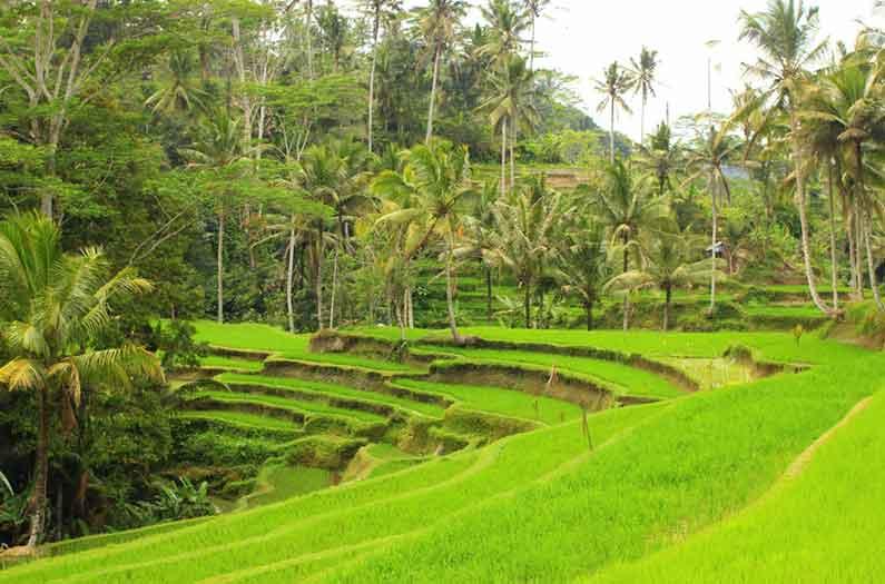 бали115